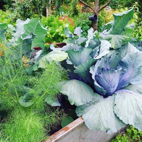 Danis Garten
